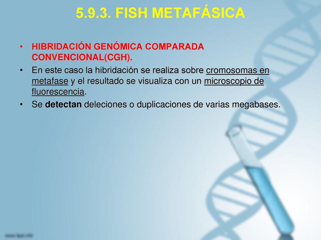 5.9.3. FISH METAFÁSICA HIBRIDACIÓN GENÓMICA COMPARADA CONVENCIONAL(CGH).