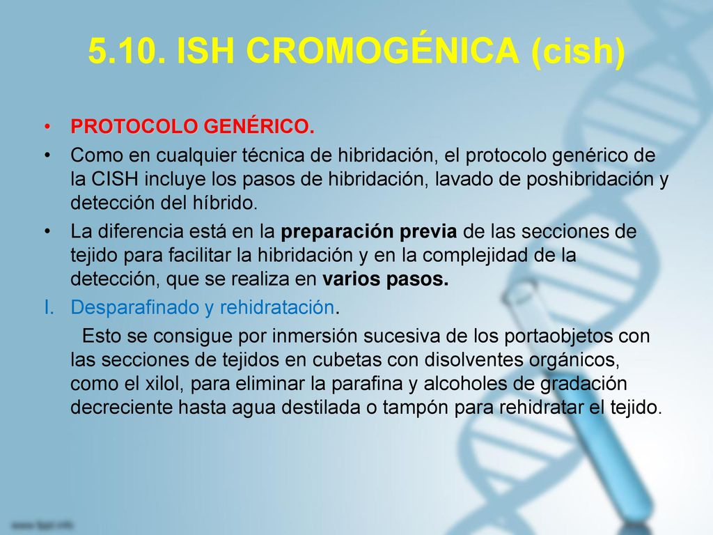 5.10. ISH CROMOGÉNICA (cish)