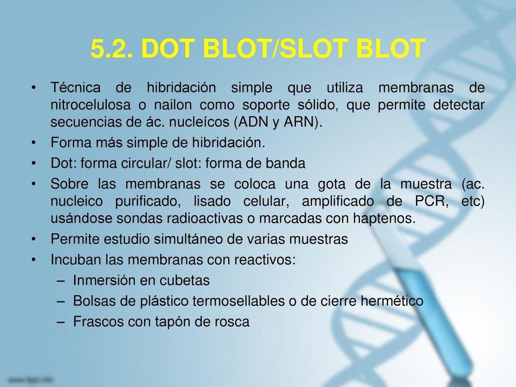 5.2. DOT BLOT/SLOT BLOT