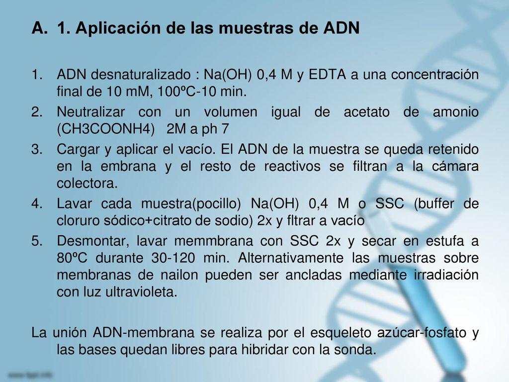 1. Aplicación de las muestras de ADN