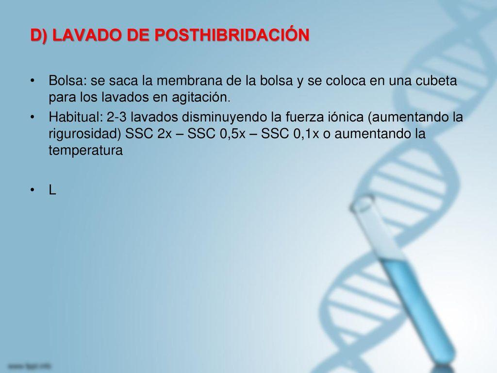 D) LAVADO DE POSTHIBRIDACIÓN