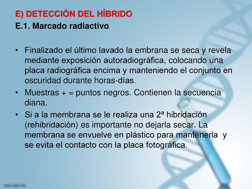 E) DETECCIÓN DEL HÍBRIDO