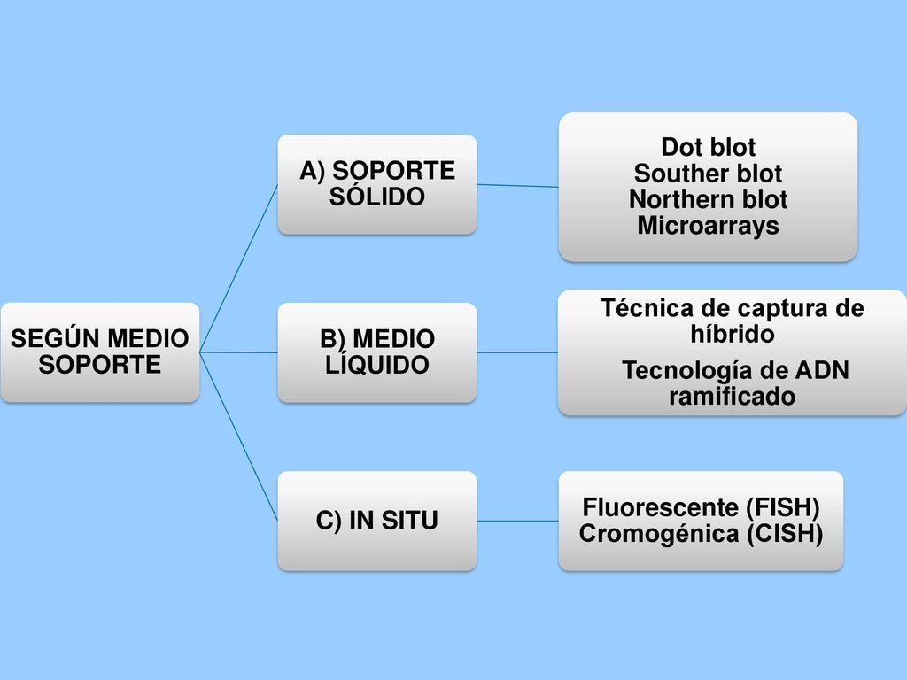 Dot blot Souther blot Northern blot Microarrays B) MEDIO LÍQUIDO
