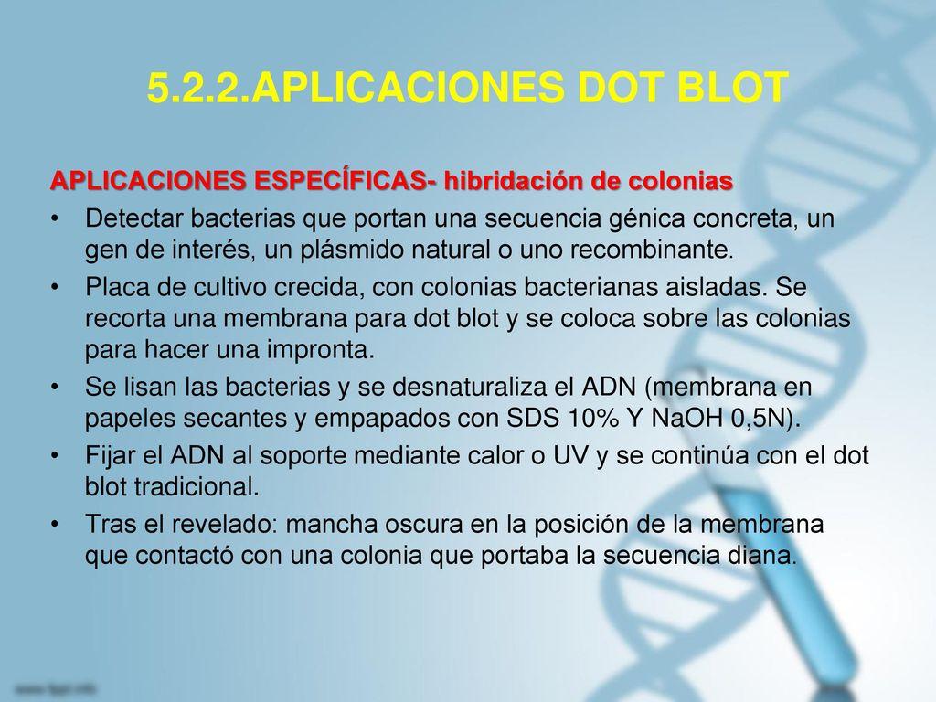 5.2.2.APLICACIONES DOT BLOT APLICACIONES ESPECÍFICAS- hibridación de colonias.