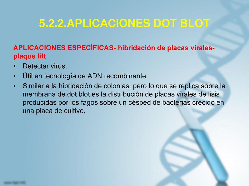 5.2.2.APLICACIONES DOT BLOT APLICACIONES ESPECÍFICAS- hibridación de placas virales-plaque lift. Detectar virus.