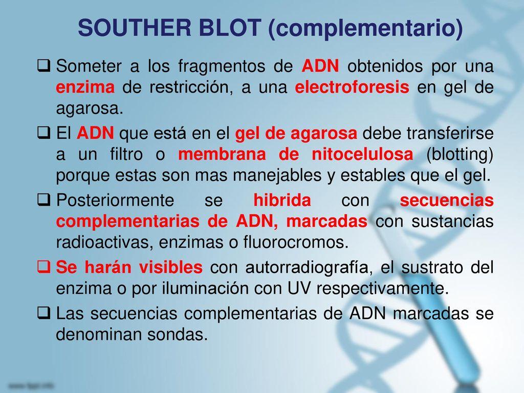 SOUTHER BLOT (complementario)