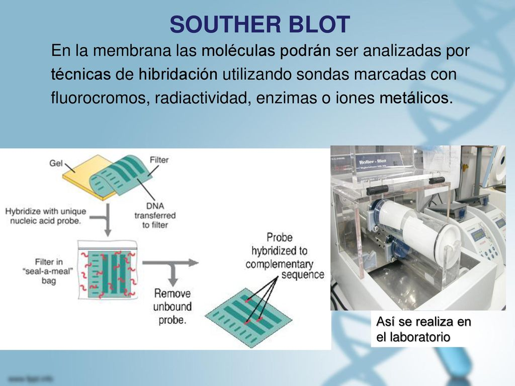 SOUTHER BLOT