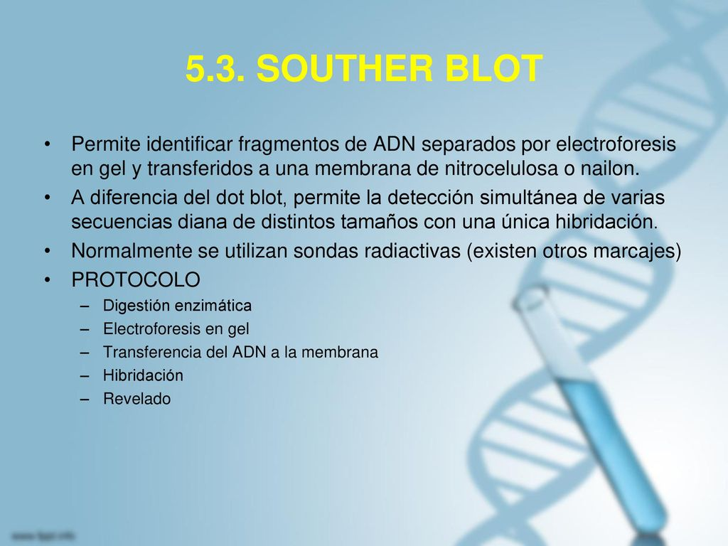 5.3. SOUTHER BLOT Permite identificar fragmentos de ADN separados por electroforesis en gel y transferidos a una membrana de nitrocelulosa o nailon.