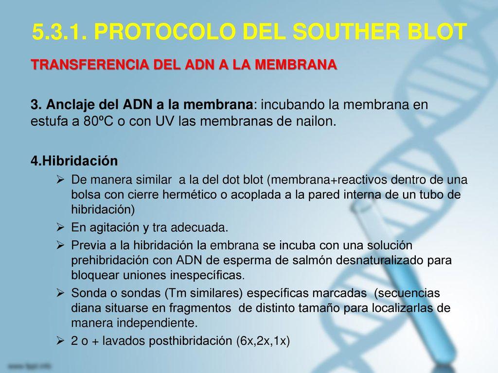 5.3.1. PROTOCOLO DEL SOUTHER BLOT
