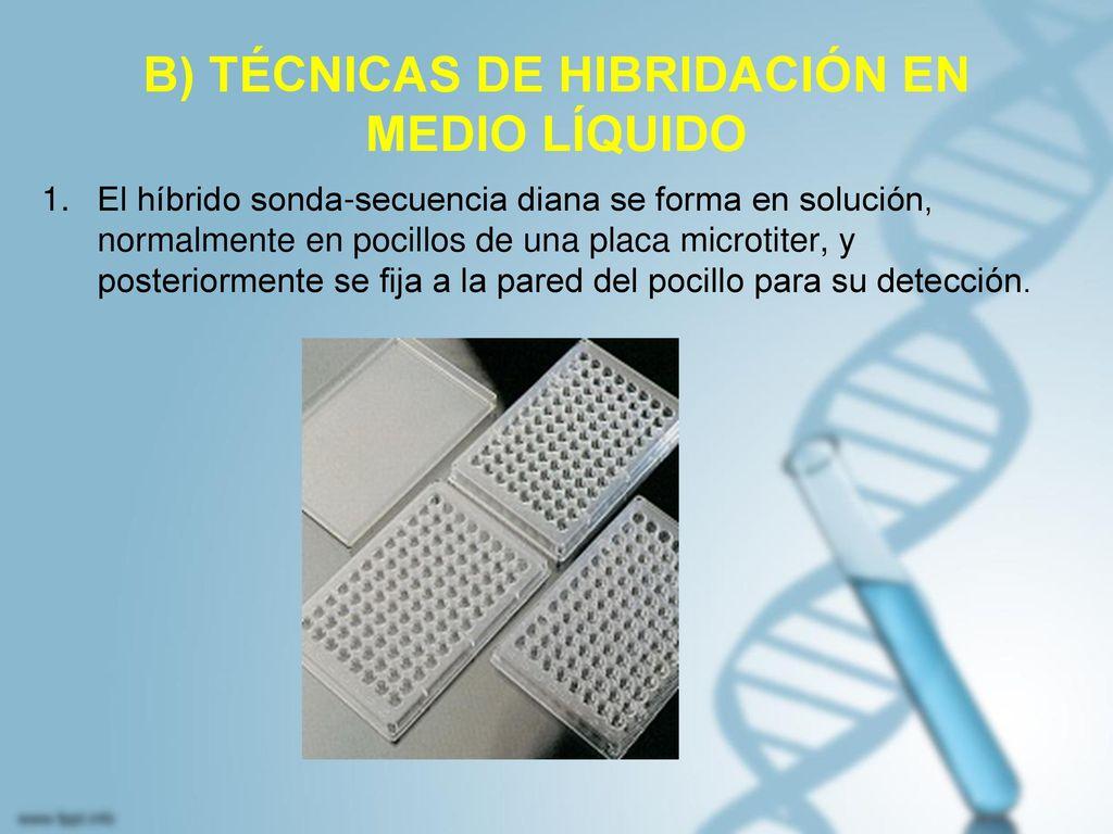B) TÉCNICAS DE HIBRIDACIÓN EN MEDIO LÍQUIDO