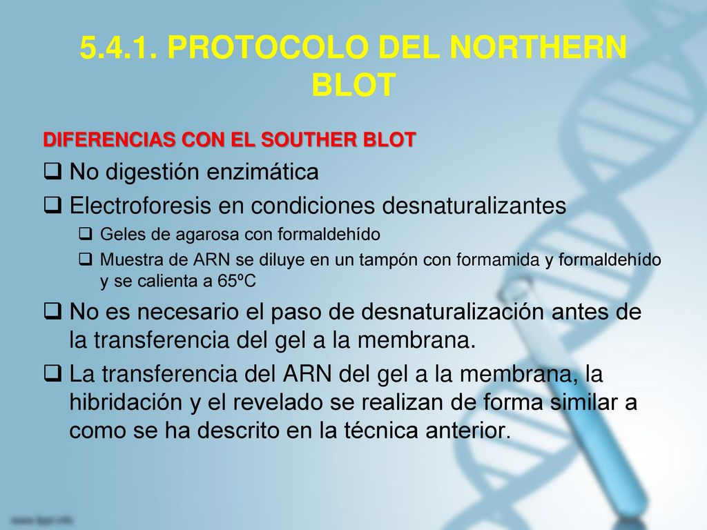 5.4.1. PROTOCOLO DEL NORTHERN BLOT