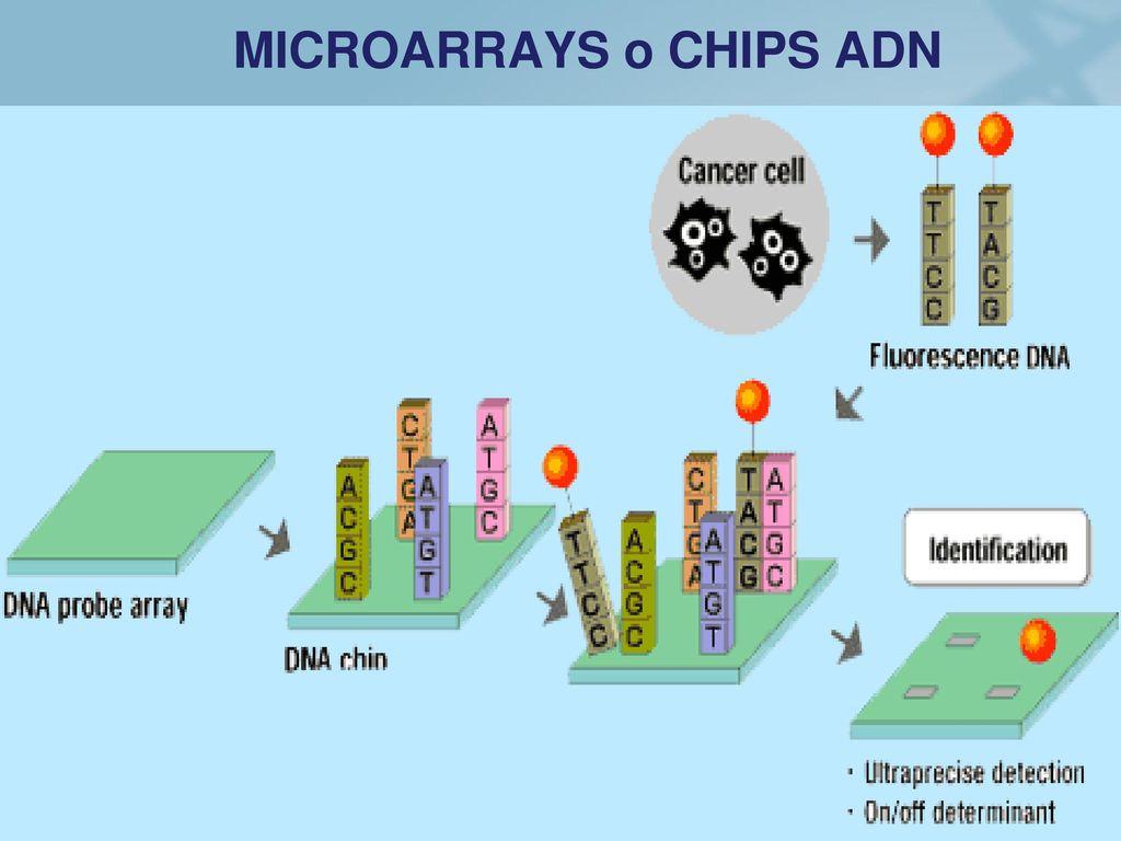 MICROARRAYS o CHIPS ADN