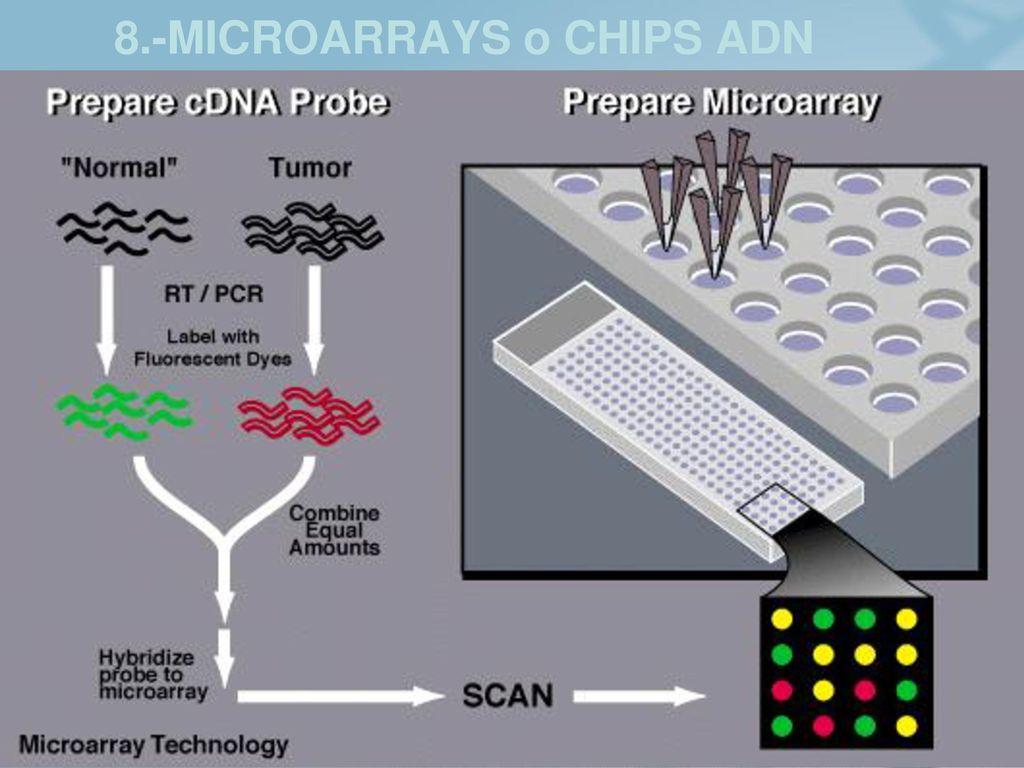 8.-MICROARRAYS o CHIPS ADN