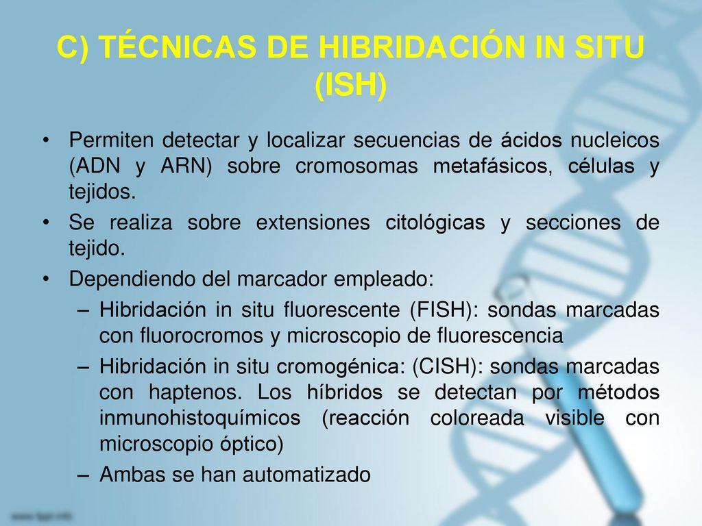 C) TÉCNICAS DE HIBRIDACIÓN IN SITU (ISH)