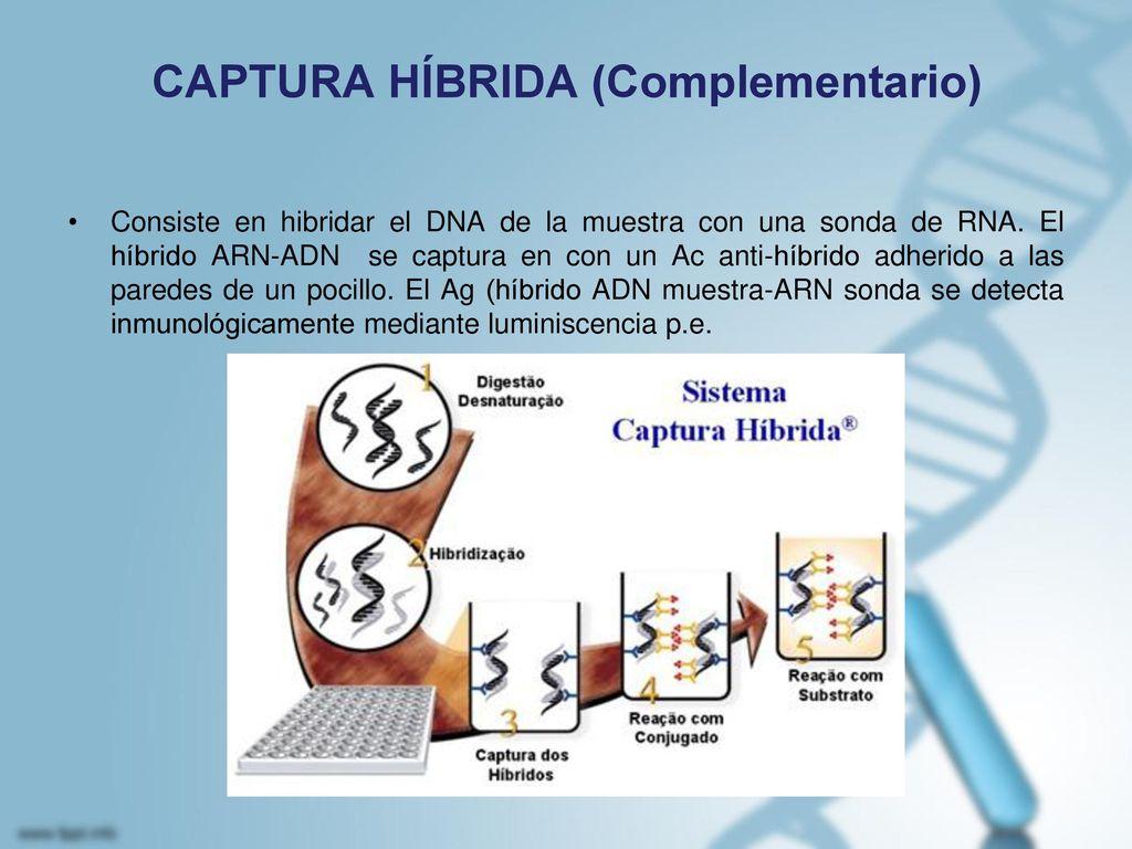 CAPTURA HÍBRIDA (Complementario)