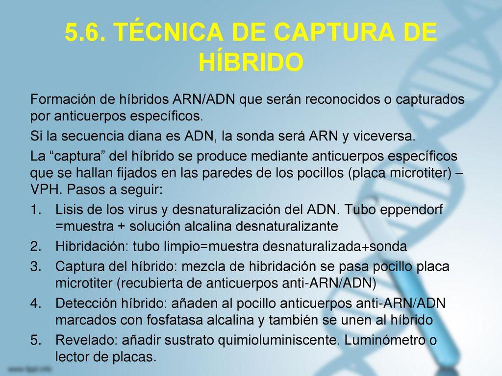 5.6. TÉCNICA DE CAPTURA DE HÍBRIDO