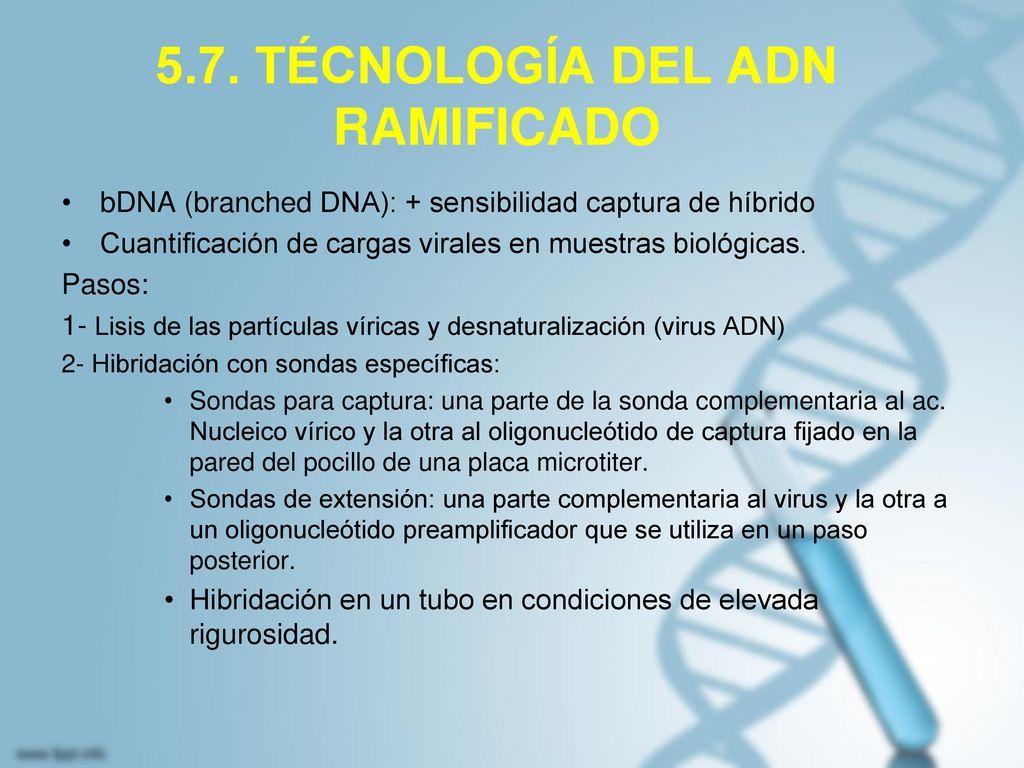 5.7. TÉCNOLOGÍA DEL ADN RAMIFICADO