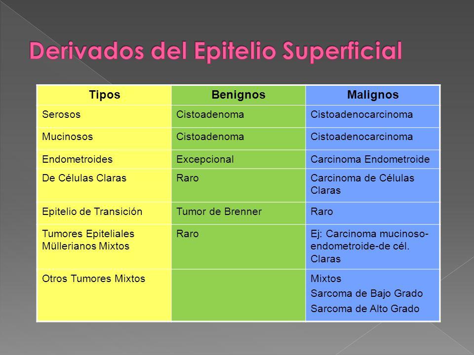 Derivados del Epitelio Superficial