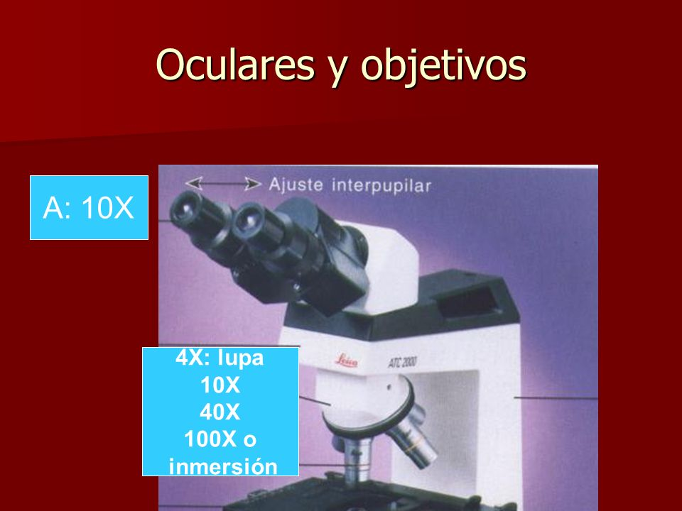 Oculares y objetivos A: 10X 4X: lupa 10X 40X 100X o inmersión