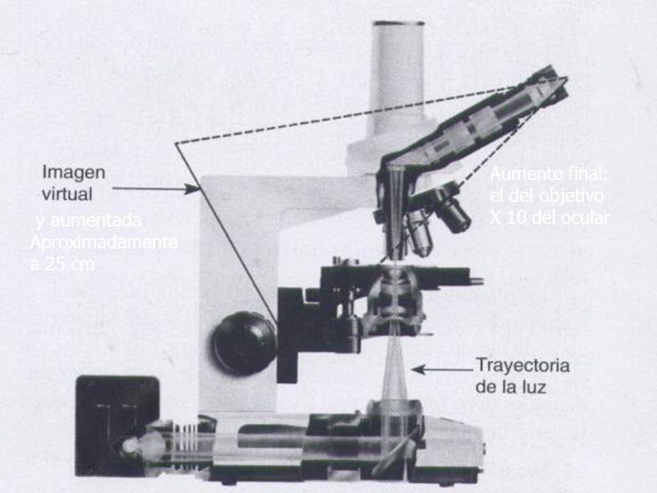 Aumento final: el del objetivo X 10 del ocular