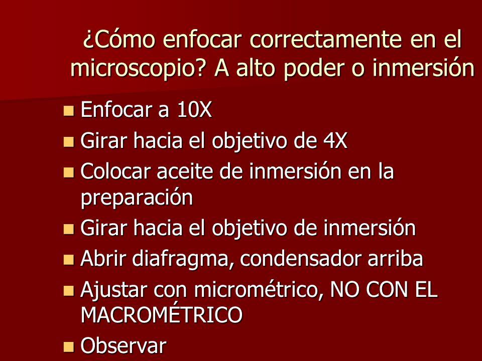 ¿Cómo enfocar correctamente en el microscopio A alto poder o inmersión