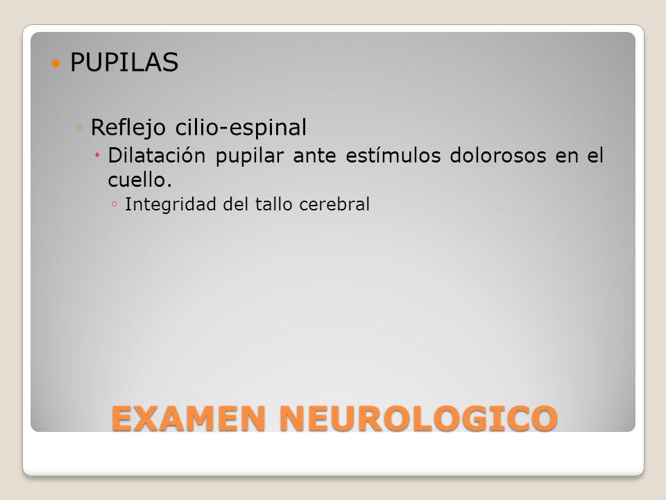 EXAMEN NEUROLOGICO PUPILAS Reflejo cilio-espinal