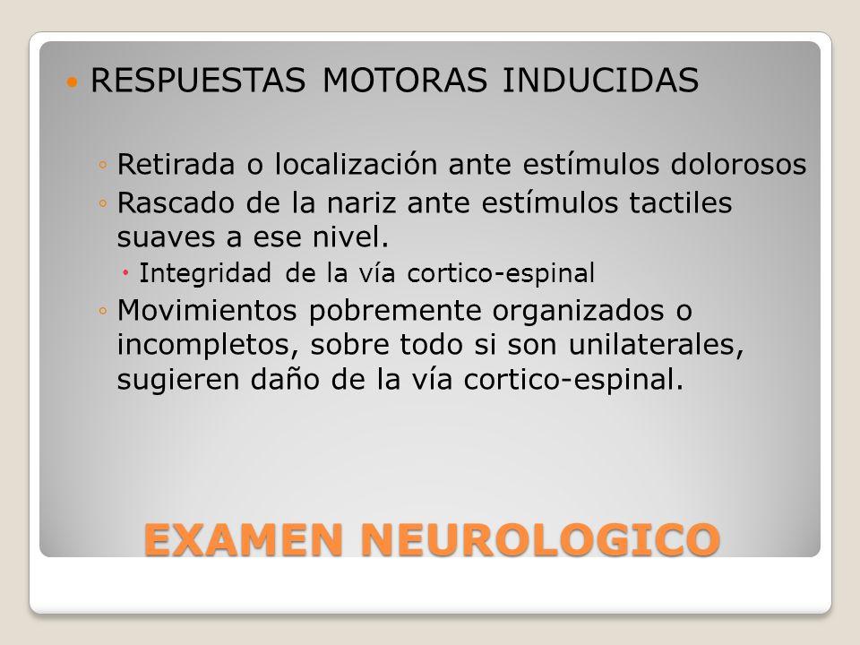 EXAMEN NEUROLOGICO RESPUESTAS MOTORAS INDUCIDAS