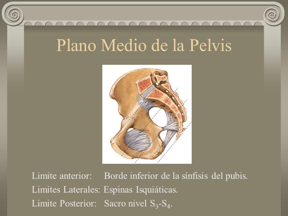 Plano Medio de la Pelvis