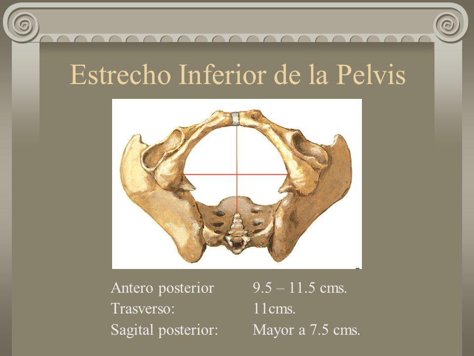Estrecho Inferior de la Pelvis