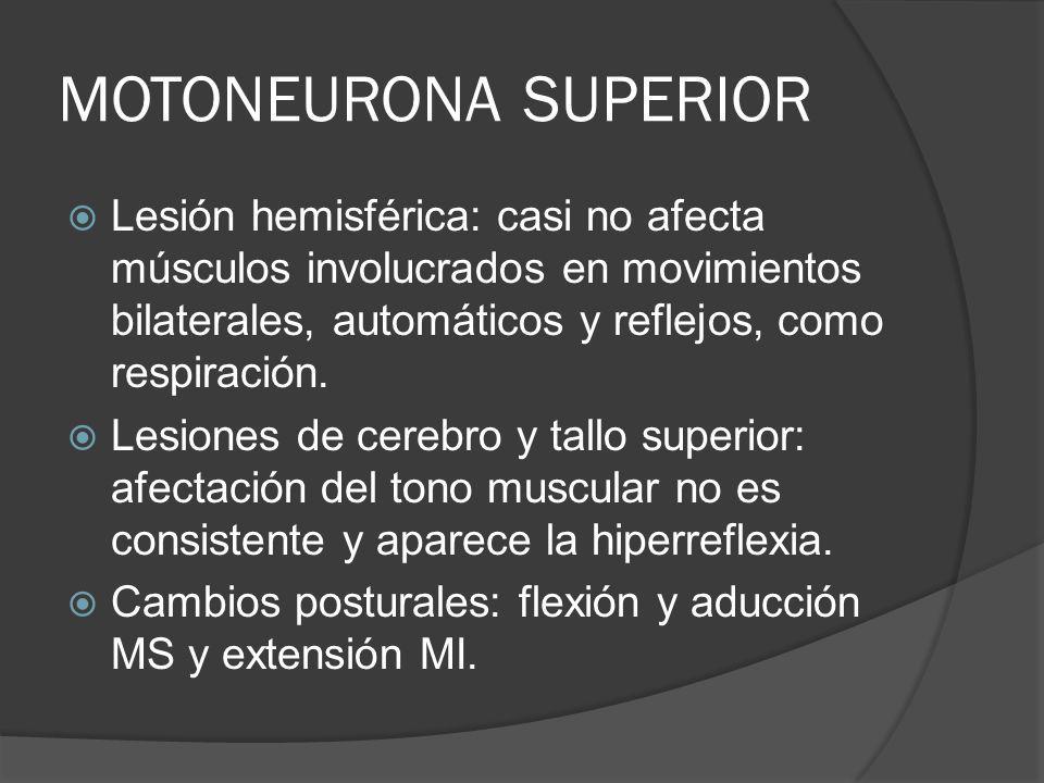 MOTONEURONA SUPERIOR Lesión hemisférica: casi no afecta músculos involucrados en movimientos bilaterales, automáticos y reflejos, como respiración.