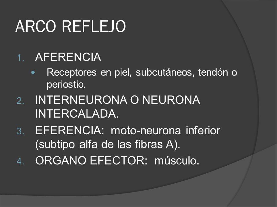 ARCO REFLEJO AFERENCIA INTERNEURONA O NEURONA INTERCALADA.