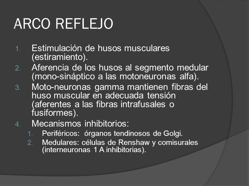 ARCO REFLEJO Estimulación de husos musculares (estiramiento).