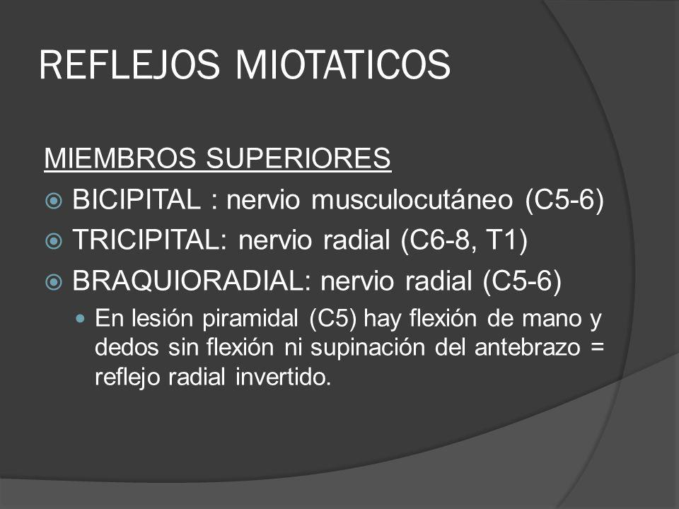 REFLEJOS MIOTATICOS MIEMBROS SUPERIORES