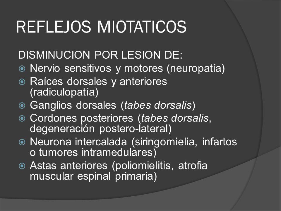 REFLEJOS MIOTATICOS DISMINUCION POR LESION DE: