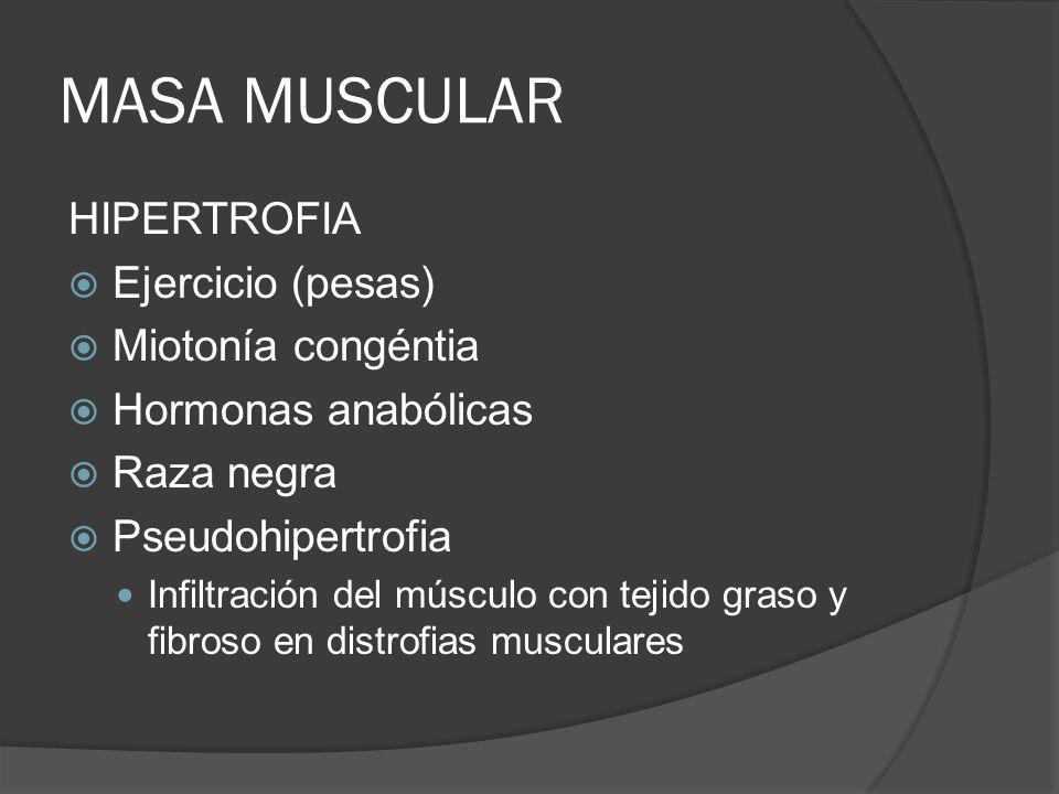 MASA MUSCULAR HIPERTROFIA Ejercicio (pesas) Miotonía congéntia