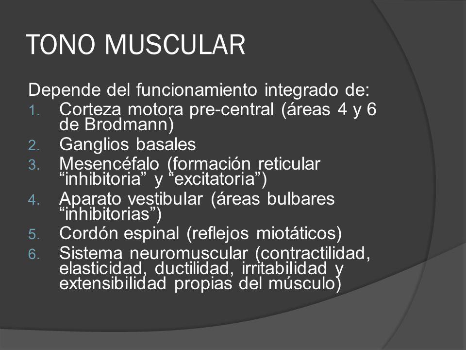 TONO MUSCULAR Depende del funcionamiento integrado de: