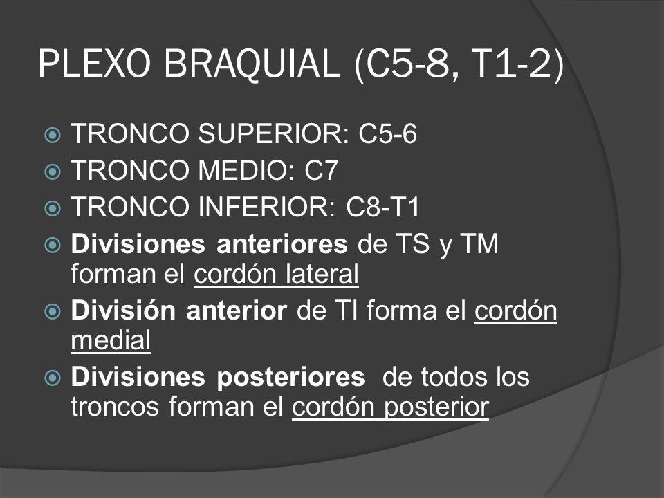 PLEXO BRAQUIAL (C5-8, T1-2) TRONCO SUPERIOR: C5-6 TRONCO MEDIO: C7