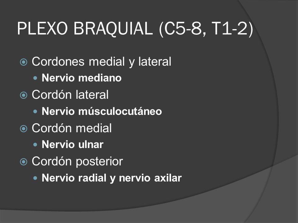 PLEXO BRAQUIAL (C5-8, T1-2) Cordones medial y lateral Cordón lateral