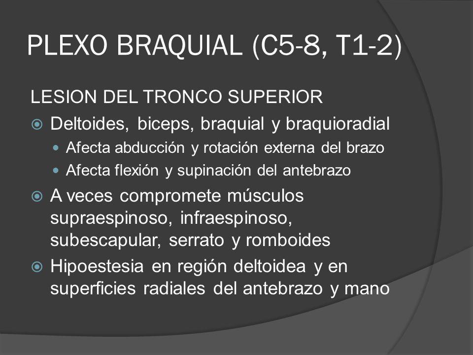 PLEXO BRAQUIAL (C5-8, T1-2) LESION DEL TRONCO SUPERIOR
