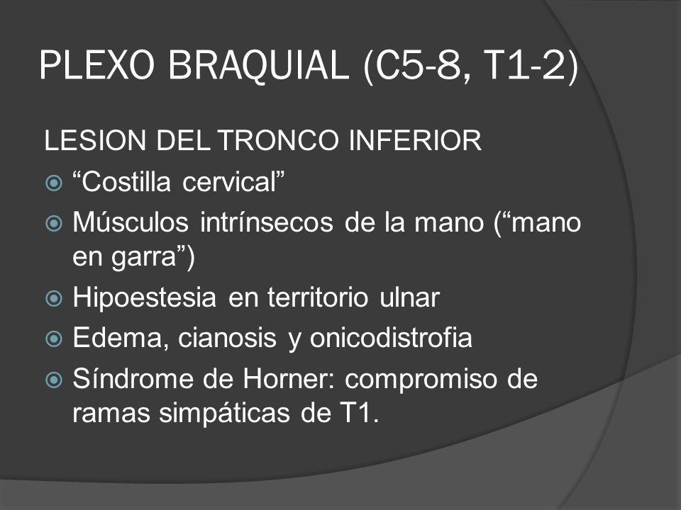 PLEXO BRAQUIAL (C5-8, T1-2) LESION DEL TRONCO INFERIOR