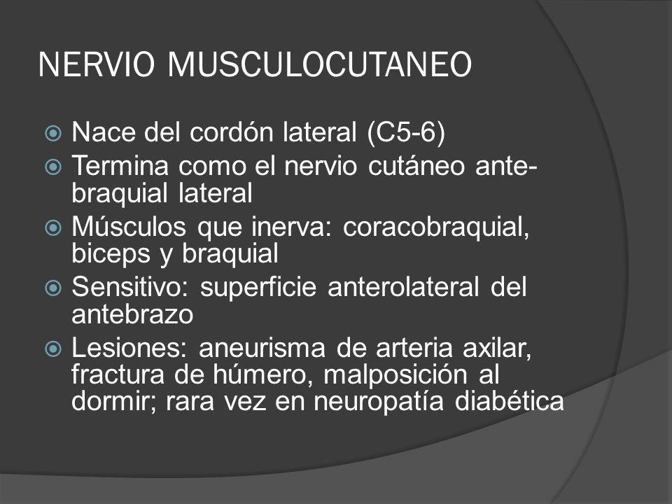 NERVIO MUSCULOCUTANEO