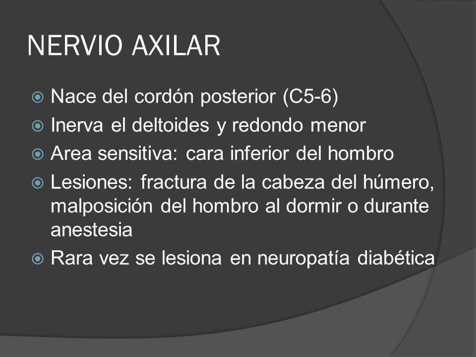 NERVIO AXILAR Nace del cordón posterior (C5-6)