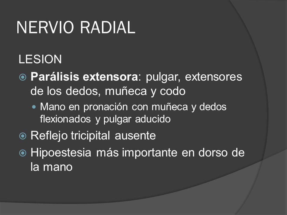 NERVIO RADIALLESION. Parálisis extensora: pulgar, extensores de los dedos, muñeca y codo.