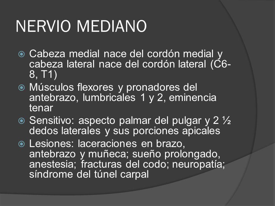 NERVIO MEDIANO Cabeza medial nace del cordón medial y cabeza lateral nace del cordón lateral (C6-8, T1)