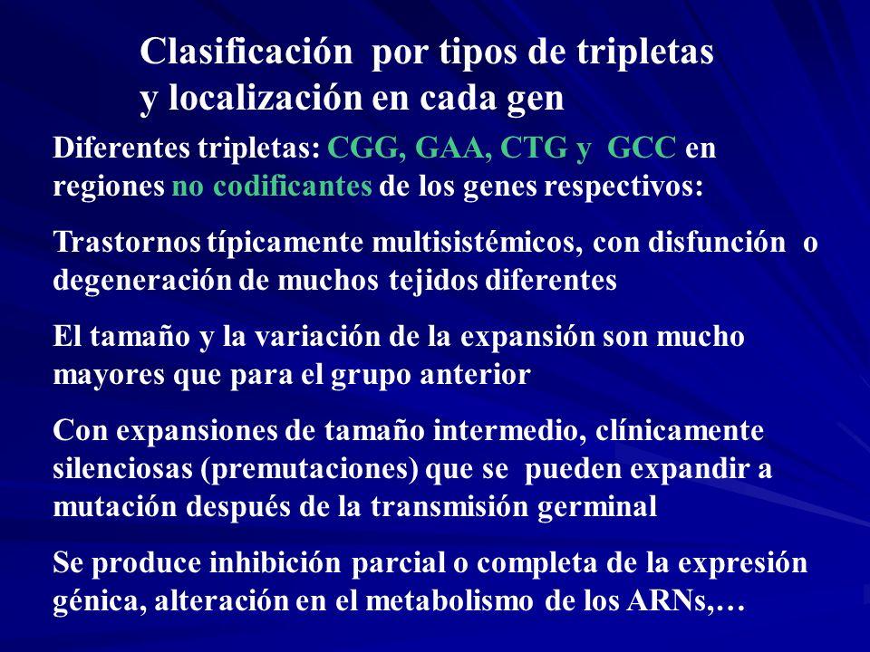 Clasificación por tipos de tripletas y localización en cada gen