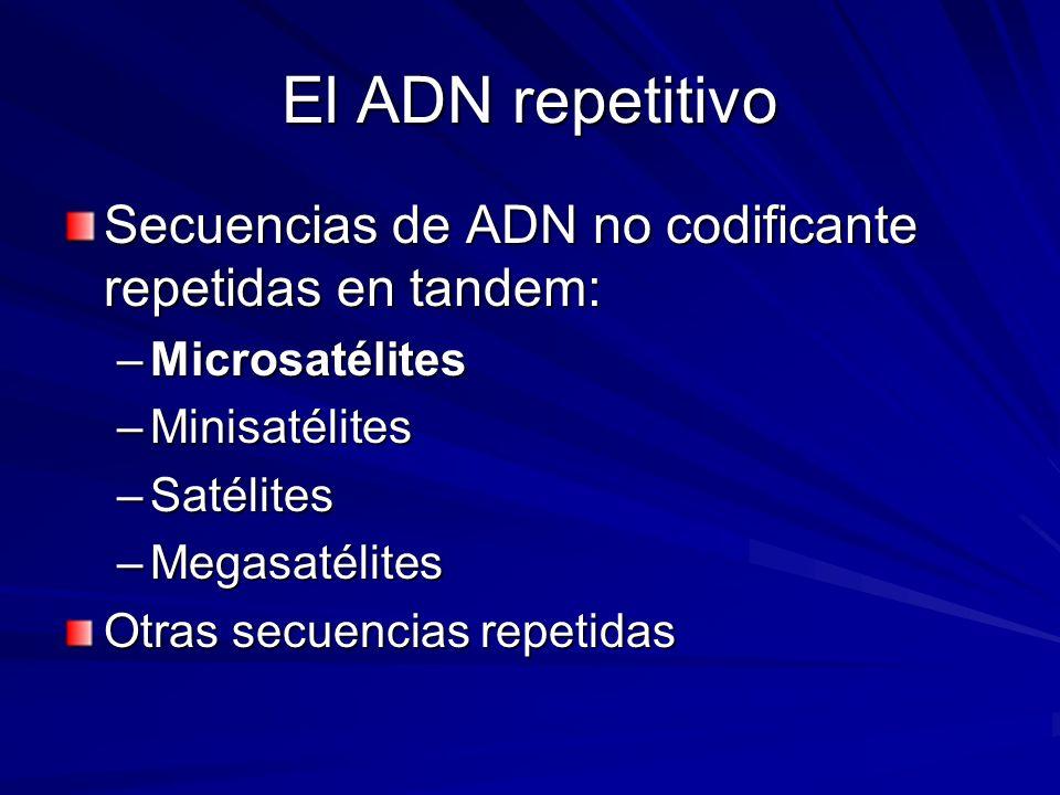 El ADN repetitivo Secuencias de ADN no codificante repetidas en tandem: Microsatélites. Minisatélites.