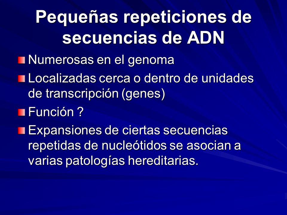 Pequeñas repeticiones de secuencias de ADN