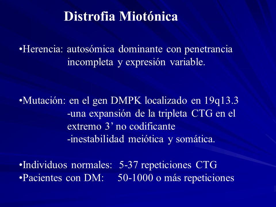 Distrofia Miotónica Herencia: autosómica dominante con penetrancia
