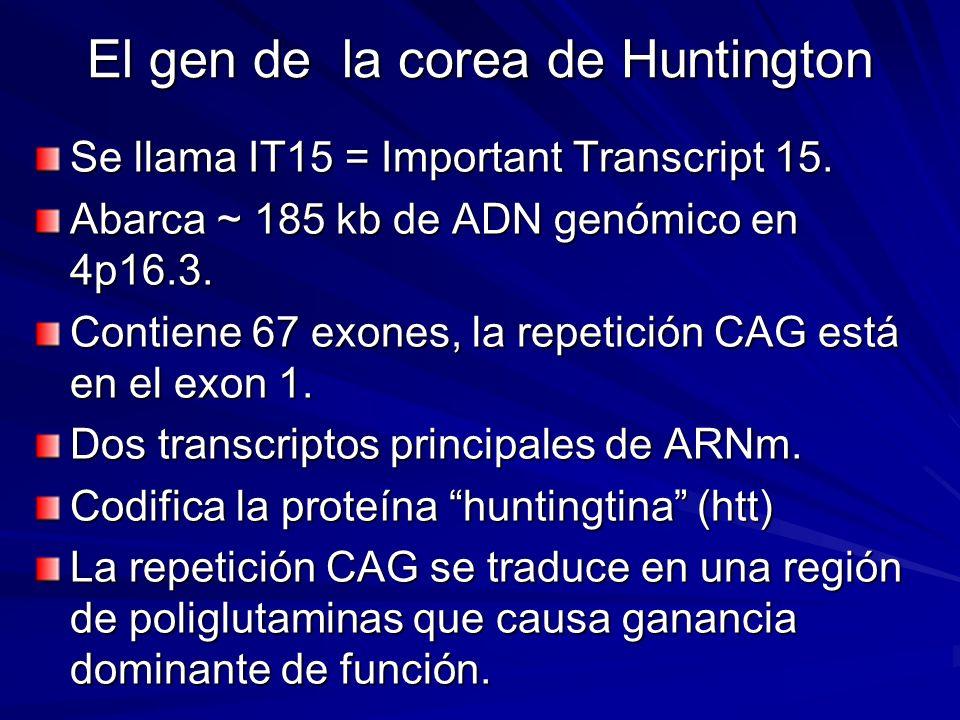 El gen de la corea de Huntington