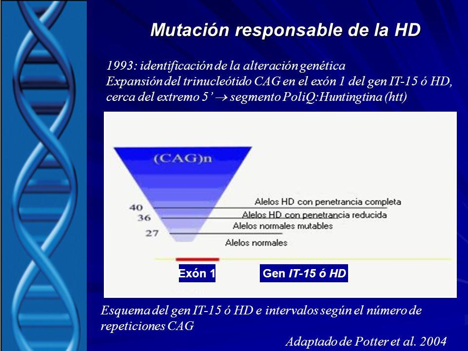 Mutación responsable de la HD